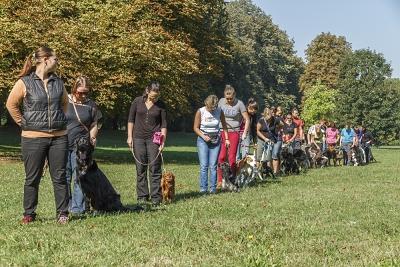 Skupinový výcvik psů Aigon Ostrava